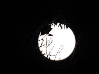 Moon..28-09-2015 © 2015 nicole leduc