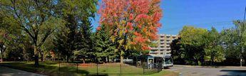 Autumn in Laval,qc.anada © 2018 nicole leduc