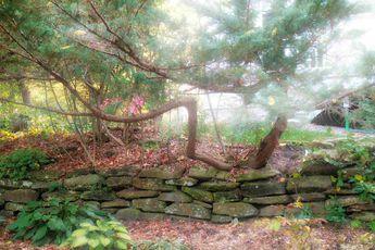Chenier's house-backyard © 2017 nicole leduc