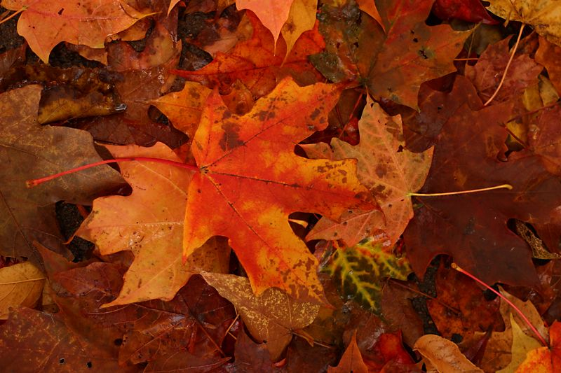 Fall colors © 2004 John Strait