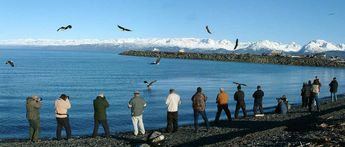 Eagle Photographers in Homer Alaska © 2005 Ray Holbrook